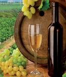 2 Steps to Help You Choose a Wine